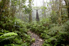 The path eases off briefly in the upper montane, or cloud forest.