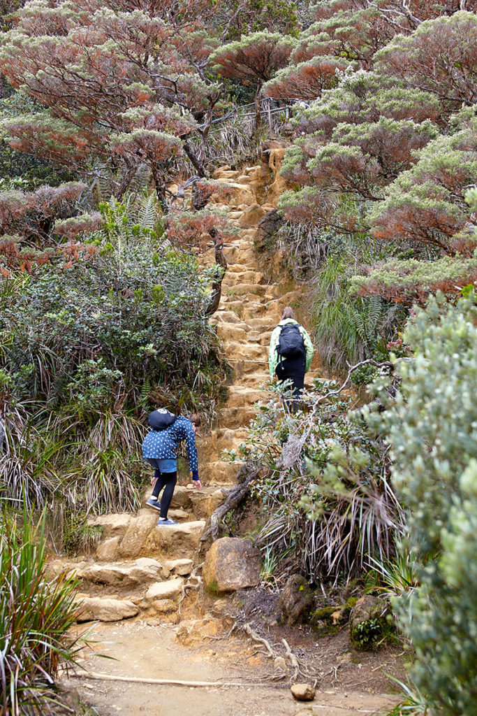Climbing Mt Kinabalu via the old Mesilau trail