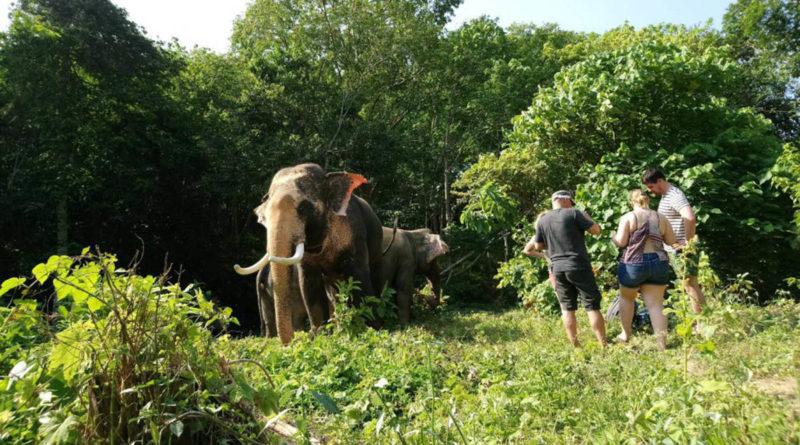 Elephants lead the way