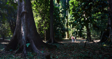 Kebun Raya, Bogor: Gardens in the city